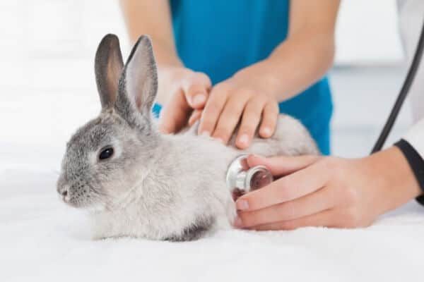 Rabbit Nursing Care Plans